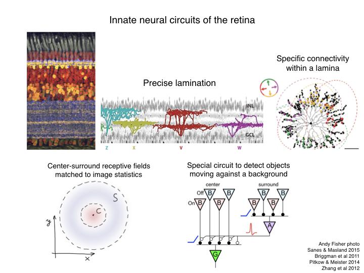 Neuro-Evo 180506.003.png